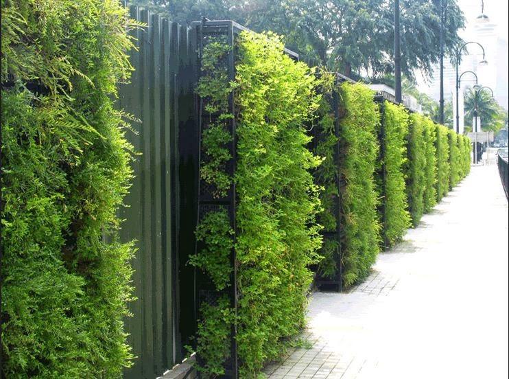 Vườn treo thẳng đứng tại Chung cư cao cấp Seasons Avenue